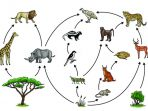 Penyusun Ekosistem dan Hubungan Di Dalamnya
